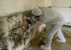 Tucson Mold Removal